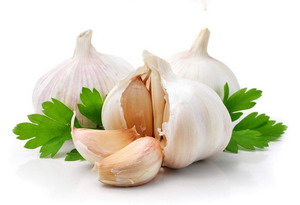 ayatmadari-sir-garlic-16