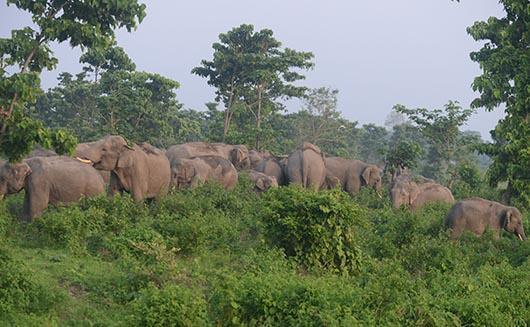 زندگی فیل ها در منطقه حفاظت شده جنگل کالابری