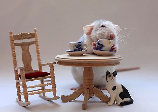 تصاویر دیدنی عکس و کلیپ  , تصاویری جالب و دیدنی از موش ها