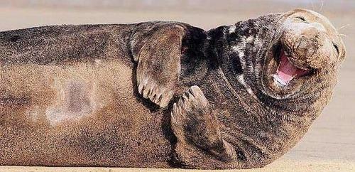 تصاویر طنز عکس و کلیپ  , حیوانات خندان (1)