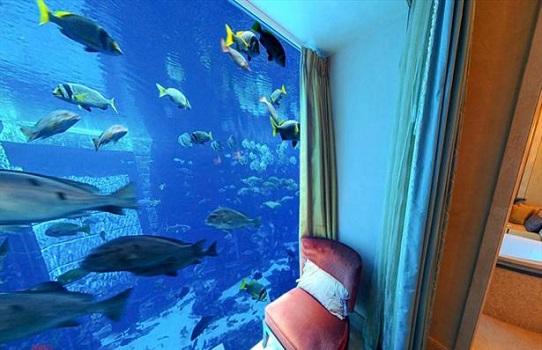 تصاویر دیدنی عکس و کلیپ  , فضاهای شگفت انگیز در زیر آب