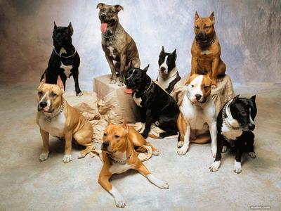 دانستنی ها گوناگون  , ده حیوان از باهوشترین موجودات دنیا
