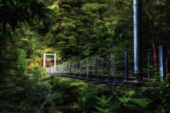 یاکوشیما جزیره ای جنگلی و شگفت انگیز +عکس