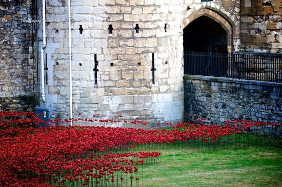 کاخ سلطنتی لندن در میان گل های خشخاش +عکس
