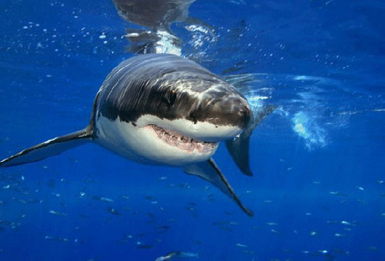 خطرناک ترین حیوانات دنیا (قسمت اول)