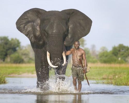 دانستنی ها گوناگون  , نکاتی در مورد فیل ها