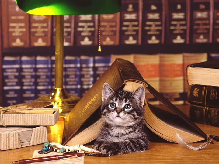 تصاویر طنز عکس و کلیپ  , تصاویری جالب از گربه های دوستدار کتاب