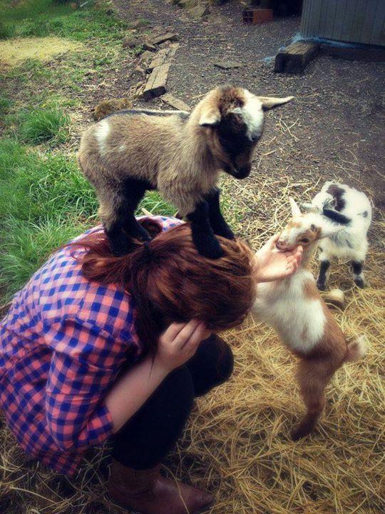 حیوانات - بره