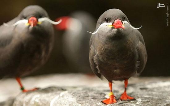پرنده های عجیب غریب