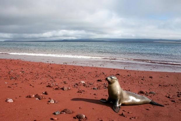 amazing-unusual-beaches-10-1-660x440