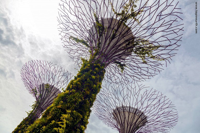 singapore-gardens-by-the-bay-supertree-cloud-forest-0