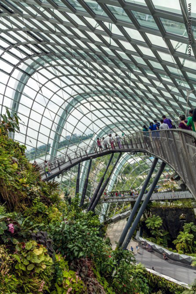 singapore-gardens-by-the-bay-supertree-cloud-forest-12