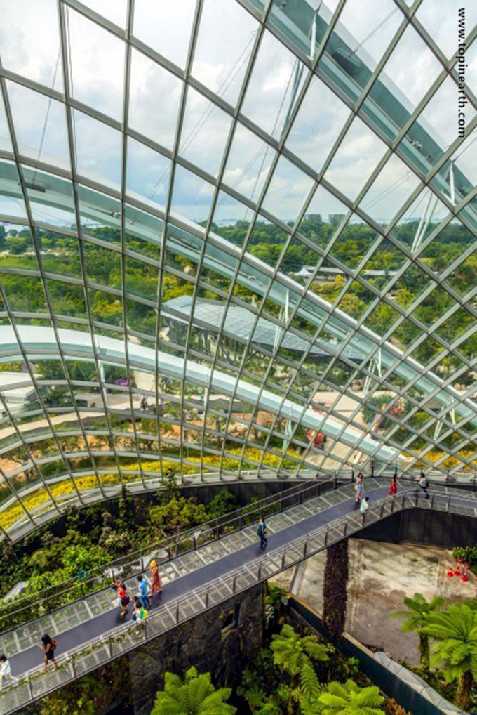 singapore-gardens-by-the-bay-supertree-cloud-forest-14