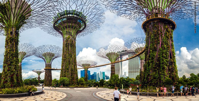 singapore-gardens-by-the-bay-supertree-cloud-forest-19