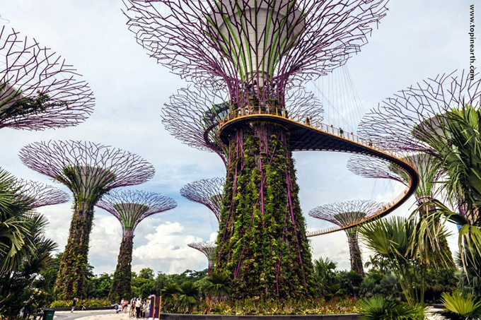 singapore-gardens-by-the-bay-supertree-cloud-forest-2