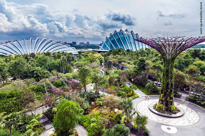 singapore-gardens-by-the-bay-supertree-cloud-forest-5