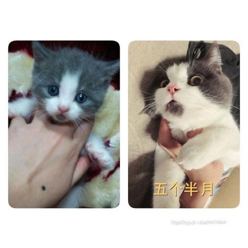 گربه همیشه متعجب! +عکس