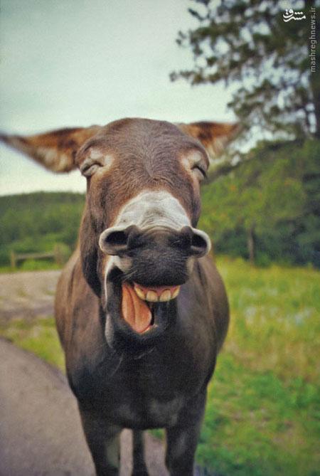تصاویر طنز عکس و کلیپ  , خنده خرکی !!