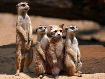 عکس خنده دار حیوانات, عکس های بامزه و خنده دار