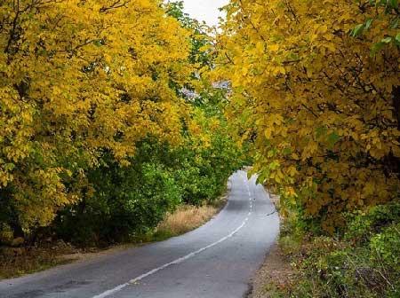 گردشگری,تور گردشگری,پاییز در بهشت هاور