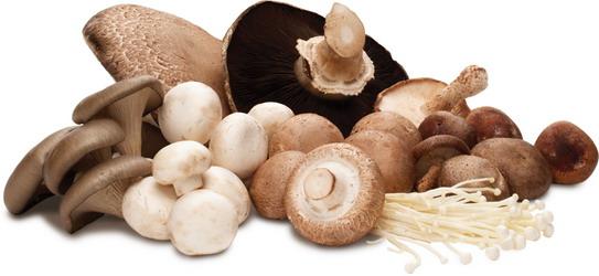 Mushrooms ,خواص قارچ, فواید قارچ