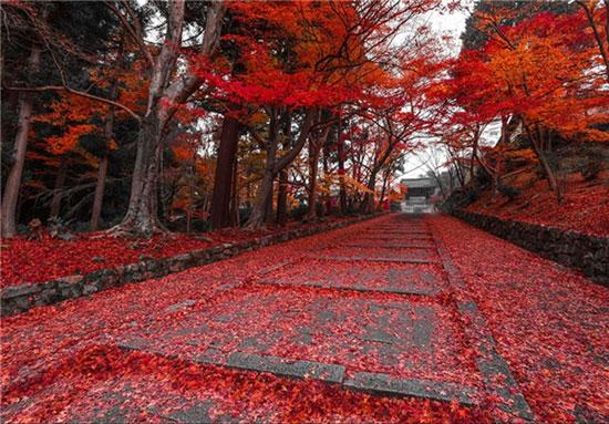 (تصاویر) زیباترین پاییزهای جهان