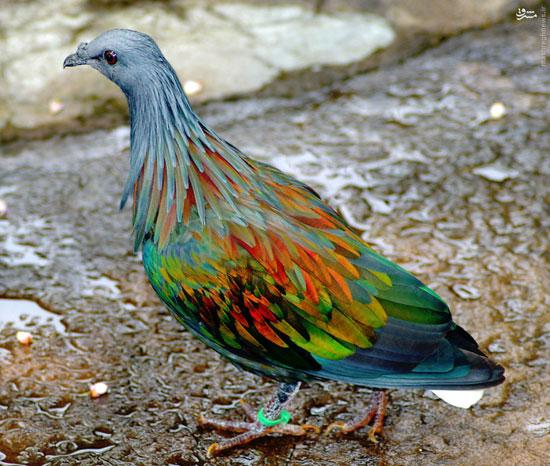 حیوانات ,طبیعت, حیوانات زیبا ,رنگ آمیزی خدا ,رنگ حیوانات ,حیوانات با رنگ های زیبا ,حیوانات خوشرنگ ,نقاشی خدا بر حیوانات