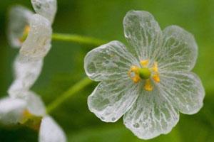 متفاوت ترین گل زیبای جهان (عکس)