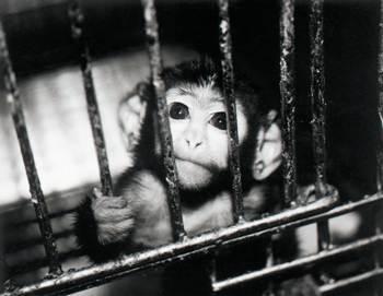 آزمایش روی حیوانات زنده