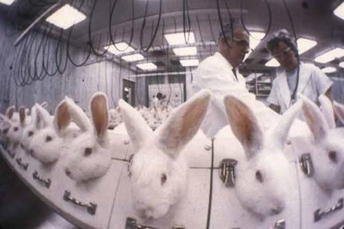 حقایق گفته نشده از آزمایش روی حیوانات