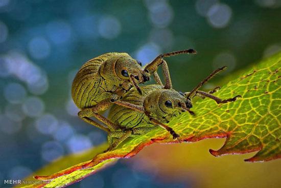 تصاویر میکروسکوپی, تصویر میکروسکوپی, تصاویر میکرسکوپی, تصویر میکرسکوپی ,تصویر موجودات زیر میکروسکوپ ,موجودات میکروسکوپی ,موجودات ریز ,موجودات ذره بینی, تصویر موجودات ریز