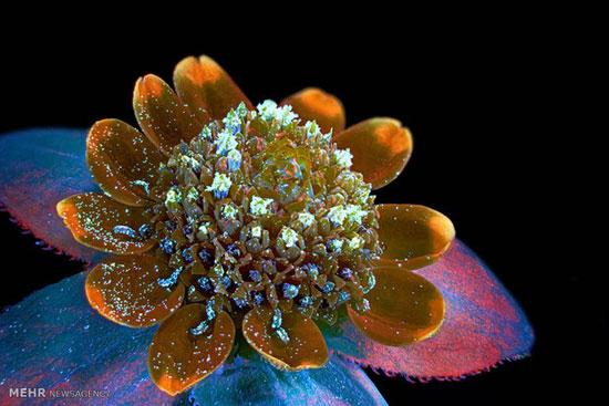 دنیای زیر میکروسکوپ