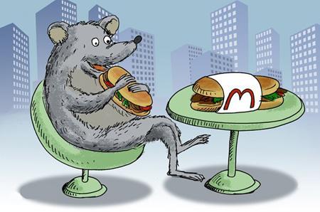 عکس و کلیپ کاریکاتور  , کاریکاتور موش های تهران