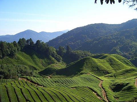 تور مالزی,مالزی