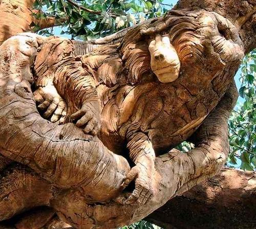 کندهﻛﺎری های بسیار هنرمندانه و خلاقانه روی تنه درختی کهنسال