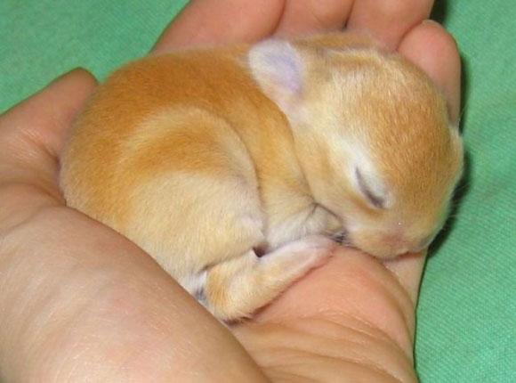 l-Fast-asleep1