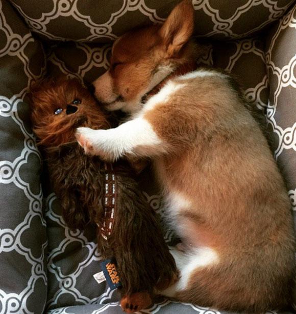 l-If-you-still-sleep-with-a-stuffed-animal