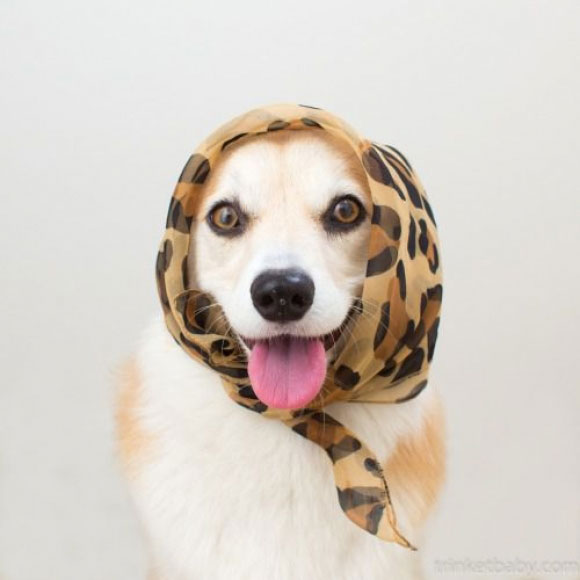 l-Posh-pup