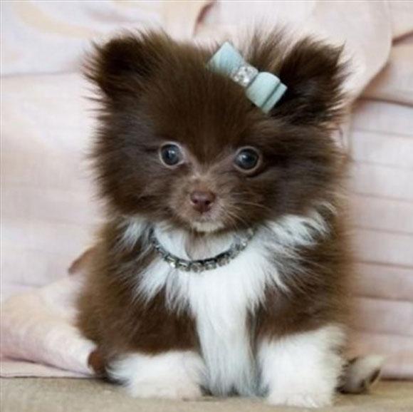 l-Pretty-Puppy-