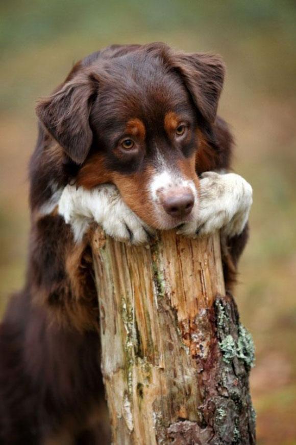 l-Puppy-dog-eyes