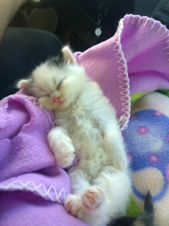 l-This-furball-instantly-feel-asleep-in-my-lap