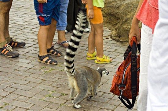 باغ وحش استثنایی و دیدنی بیوپارک در والنسیای اسپانیا