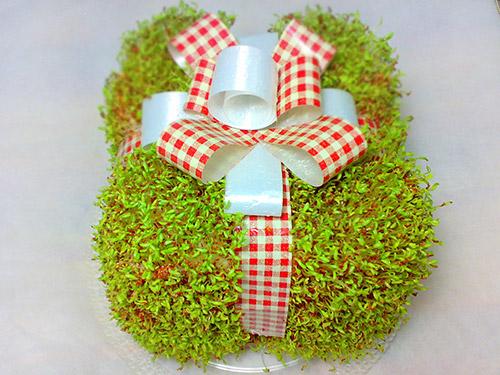ساخت سبزه عید به شکل جعبه کادو , سبزه عید, سبزه به شکل جعبه ,ساخت سبزه, سبز کردن سبزه, آموزش تهیه سبزه,مدل سبزه عید
