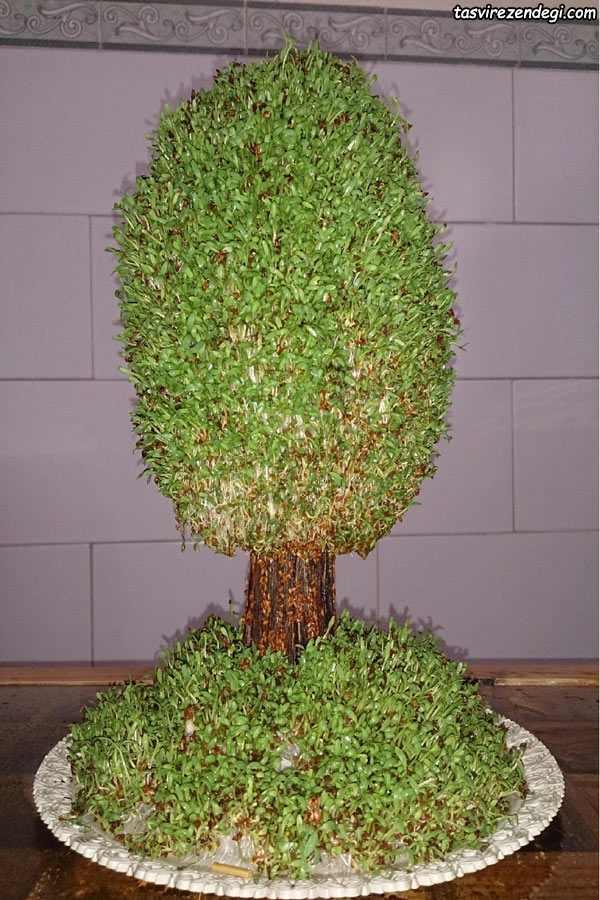کاشت سبزه به شکل درخت