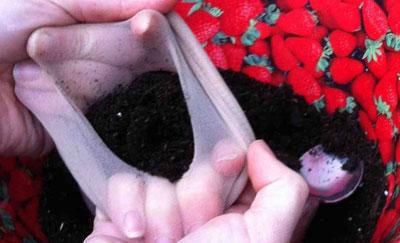 آموزش کاشتن سبزه به شکل آدمک, سبزه نوروز, سبزه عید,سبزه, سبزه هفت سین,سبزه آدمکی , تزیین هفت سین