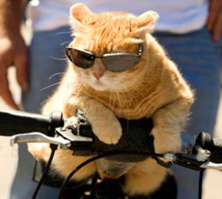 عکس های دیدنی از حیوانات بامزه , عکس های جالب از حیوانات , شکار لحظه ها , عکس های خنده دار , تصاویر دیدنی