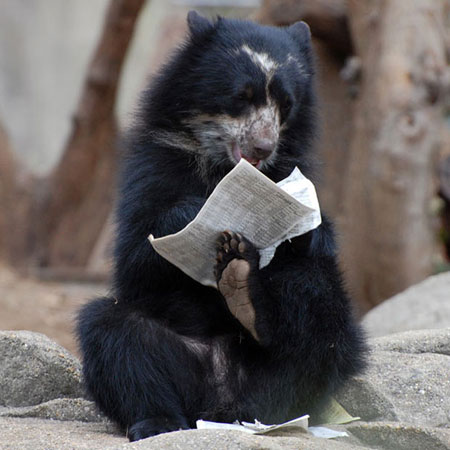 عکس های جالب و خنده دار از از حیوانات بامزه امروزی