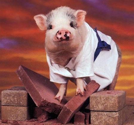 تصاویر طنز عکس و کلیپ  , عکس های دیدنی از حیوانات امروزی