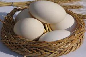 چرا تخم مرغ بیضی شکل است ؟
