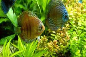 دانستنی ها گوناگون  , ماهی ها چقدر حافظه دارند؟